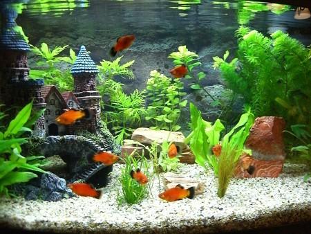 aquarium01. Black Bedroom Furniture Sets. Home Design Ideas